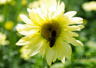 蜜蜂 哪种蜂蜜最好 中华蜜蜂蜂箱 牛奶蜂蜜可以一起喝吗 蜂蜜牛奶
