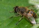 蜂蜜去痘印 蜂蜜怎么美容 蜂蜜美容护肤小窍门 吃蜂蜜会长胖吗 蜂蜜怎样祛斑