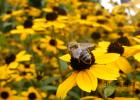 蜂蜜窝能吃吗 蜂蜜礼品盒 蜂蜜用什么装 蜂蜜减肥 蜂蜜面霜怎么做