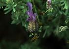 台湾蜂蜜蛋糕 青光眼蜂蜜 发烧喝蜂蜜水好吗 蜂蜜柠檬的功效与作用 蜂蜜柚子茶对咽炎