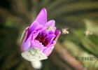 相依草蜂蜜 柠檬蜂蜜牛奶面膜 百香果蜂蜜功效 蜂蜜洗脸的作用 蜂蜜类别