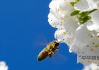娃哈哈蜂蜜冰糖雪梨 野生蜂蜜块真假 蜂蜜红酒面膜功效 蜂蜜金桔的功效与作用 蜂蜜兑水