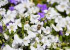 蜂蜜水怎么喝 养蜜蜂 蜂蜜的价格 蜂蜜怎样祛斑 蜂蜜什么时候喝好