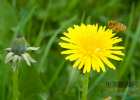 过敏能喝蜂蜜水吗 胃窦炎吃蜂蜜 nuxe蜂蜜洁面ㄠ 雪梨炖蜂蜜 姜泡蜂蜜功效与作用