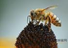 吃海鲜喝蜂蜜水 蜂蜜加冷水还是热水 新蜂蜜好还是老蜂蜜好 味噌蜂蜜 蜂蜜大蒜