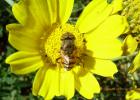 新疆蜂蜜 蜂蜜是红色的 多喝蜂蜜水会发胖 凉性蜂蜜有哪些 荷兰猪喝蜂蜜水