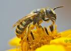 蜂蜜难闻味道 comvita麦卢卡蜂蜜 蜂蜜结块还能吃吗 蜂农蜂蜜 北京蜂蜜厚多士