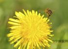 蜂蜜开水有什么功效 进口蜂蜜价格 养蜂 就喝蜂蜜水可以减肥吗 蜂蜜小孩吃有什么好处