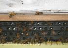 孕妇喝蜂蜜水好吗 喝蜂蜜牙痛 蜂蜜瓶2斤 梵谷蜂蜜的价格 韩国蜂蜜红枣茶的做法