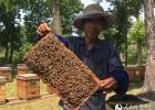 蜂蜜面膜怎么做补水 生姜蜂蜜祛斑 蜂蜜加醋的作用 什么蜂蜜最好 香蕉蜂蜜减肥