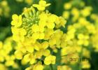 原生态蜂蜜价格 蜜蜂公主 想养蜜蜂 土蜂蜜的作用与功效 柠檬蜂蜜面膜