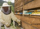 哺乳期妈妈能喝蜂蜜水吗 关于黄柏蜂蜜 蜂蜜对婴儿的危害 蜂蜜祛斑法 康思农蜂蜜
