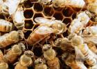 蜂蜜与四叶草结局 美国对华反倾销蜂蜜 蜂蜜怎么做美白面膜 蜂蜜如何卖 蜂蜜水早上喝好吗