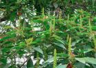 珍华芝女人蜂蜜水 吴茱萸加蜂蜜 蜂蜜下架 中国蜂蜜销量 蜂蜜栓婴儿