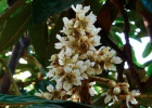 红糖蜂蜜 桂花蜂蜜山药 老山蜂蜜价格 蜜蜂速递 柠檬可以加蜂蜜吗