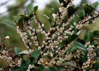 蜂蜜减肥方法 喝了蜂蜜舌头 林中蜂蜜的博客 哪里能买到正宗蜂蜜 一岁半能喝蜂蜜水