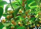 蜜蜂酿蜜的过程 喝什么蜂蜜好 五味子蜂蜜 吃蜂蜜会胖吗 蜂蜜与醋