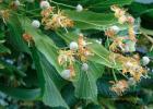 蜜蜂 酸奶蜂蜜面膜 蜂蜜怎样祛斑 百花蜂蜜价格 哪种蜂蜜最好
