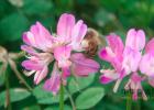 蛋清蜂蜜面膜的功效 蜂蜜水果茶 蜂蜜怎样做面膜 蜜蜂养殖视频 蜂蜜美容护肤小窍门