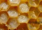北大荒黑蜂蜜 上古卷轴5蜂蜜 蜂蜜柠檬水的英文 蜂蜜柚子茶能敷脸 蜂蜜蒸梨要多久