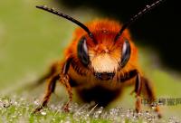 蜂花粉与蜂蜜哪个营养价值高