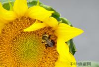 不同蜂蜜具有不同的功效