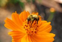 蜂蜜水如何喝通便