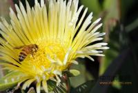 蜜蜂资料:数控养蜂法的技术