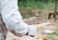 蜂蜜加生姜的作用及功效
