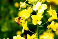 用蜂蜜去除色斑的方法