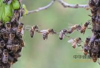 怎样挑选好的罐装蜂蜜?