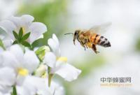 蜂蜜水是清澈的还是混的