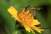 哪种蜂蜜营养高