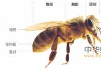 联合国粮农组织/世界卫生组织食品法典委员会蜂蜜标准(2001年修订版)