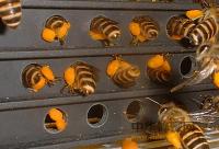 常见蜂蜜品种的化学成分