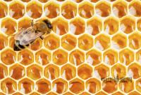 蜂王浆有哪些特性?