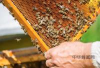 蜂蜜和桃花茶能一起喝吗