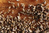 夏季蜂群加强通风防中毒