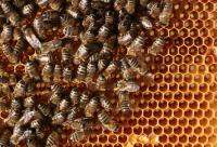 山楂和柠檬枸杞子蜂蜜可以起泡水喝吗