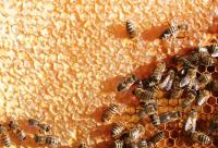 2013中国蜂产品行业大会暨青海省蜂产品推介会举行