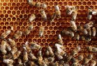 蜂蜜常见的问题