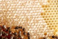 蜂蜜有分荔枝蜜和龙眼蜜,还有野生蜂蜜请问那种比较好呢??
