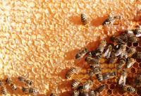 养蜂巢脾的维修和保管