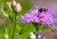 蜂胶的感官指标有哪些?