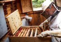 """蜂产品行业""""十二五""""规划纲要"""
