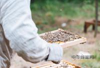 老年人应该怎么选择适合自己蜂蜜