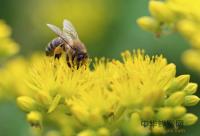 晨起喝蜂蜜水不科学