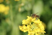 蜂蜜治疗扁桃腺炎的方法