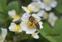 湖北襄阳开始2018年春繁 给蜜蜂包装保温,放王缩脾奖励饲喂