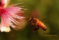 网上鉴定蜂蜜真假的方法,可信吗?